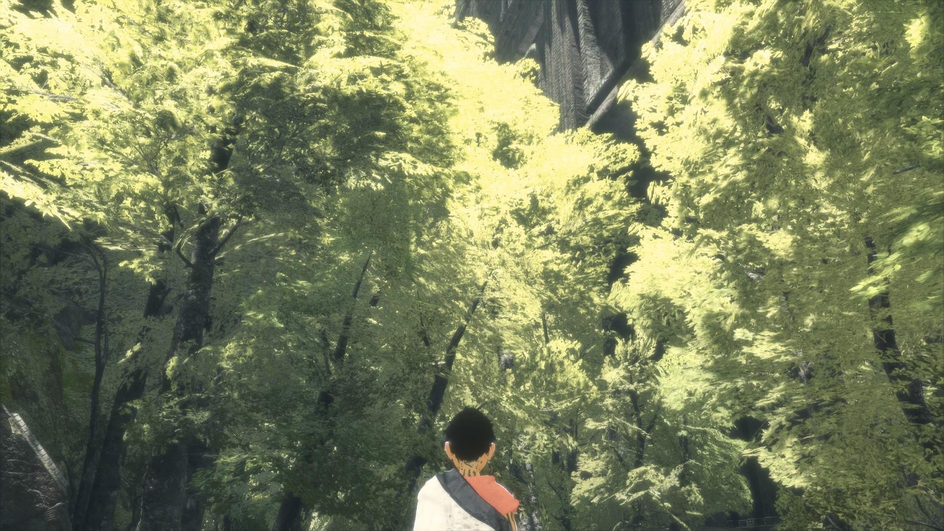 綺麗な木々…!